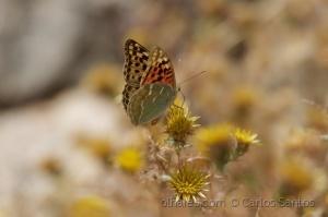/Verso de uma, frente da outra: eis a borboleta!