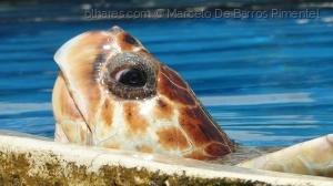 /Vida Selvagem - Olhar de Tartaruga Marinha