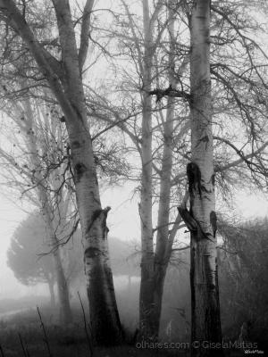Paisagem Natural/Nevoeiro.