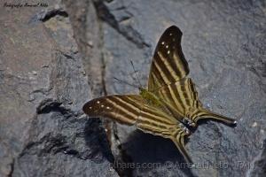 Macro/Butterfly in the rock