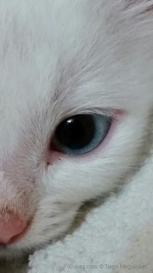 Animais/Olhar