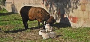 Animais/Progenitora e crias