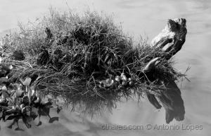 Abstrato/Tartaruga