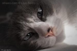 /porque hoje é dia do gato!!