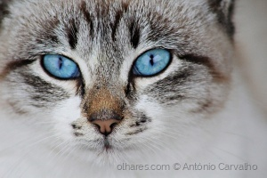 /Dia Mundial do gato