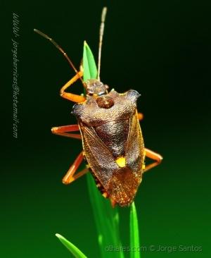 /Brincadeiras de insetos