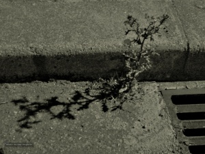 /A sombra que passa (ler)