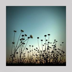 Outros/Flores secas no crepúsculo.