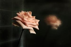 Outros/rosa ao espelho embaciado
