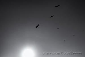 Paisagem Natural/Olhar pro céu...