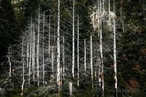 """/""""Árvores são poemas que a terra escreve para o céu"""