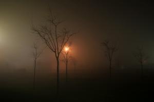 Paisagem Natural/Numa noite de nevoeiro