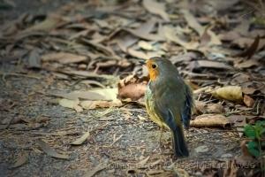 /Pássaro triste