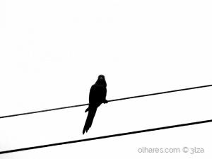 /Pássaro solitário