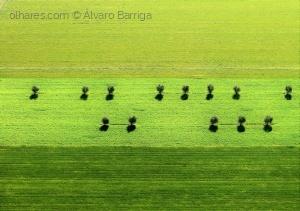 Paisagem Natural/Verdes são os Campos