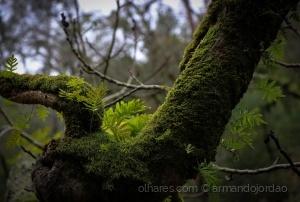 /Natureza viva...