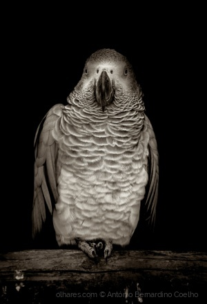 /The parrot