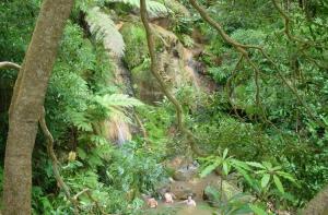 Paisagem Natural/Caldeira velha - São Miguel Açores