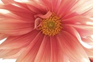 /Suavidade floral