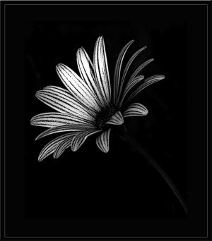 /Uma flor...uma pequena flor!!!