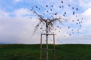 Animais/As folhas que se transformaram em aves (ler)