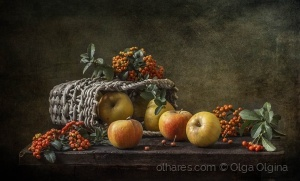 /Pyracantha and apples