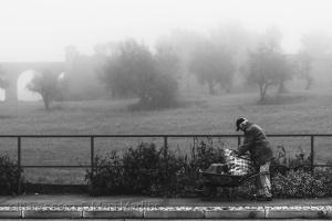 Paisagem Urbana/erva fresca para os coelhos