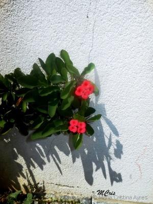 /Que os espinhos da vida se transformem em flores..