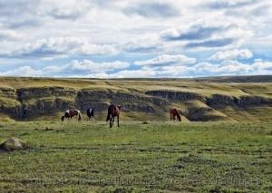 /Cavalos à solta....