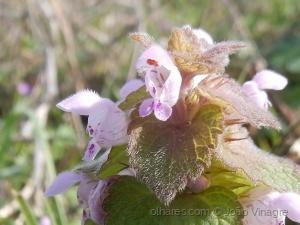 /flor do campo 4