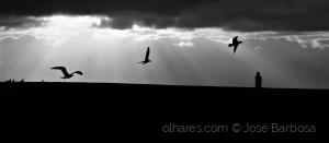 /ERA UMA VEZ um homem que amava as gaivotas