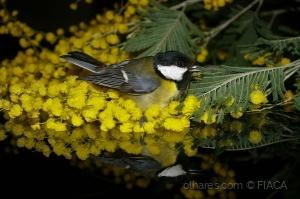 Paisagem Natural/eu ouvi o passarinho - ouvir