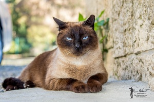 Animais/Chestnut - the street cat