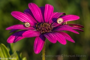 /Flores da época
