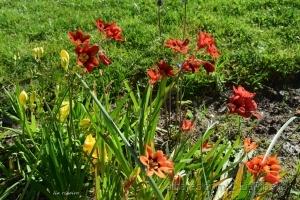Paisagem Natural/O Jardim do Cantinho