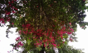/Flores (9)
