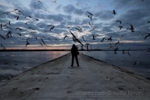 Paisagem Natural/The seagull man