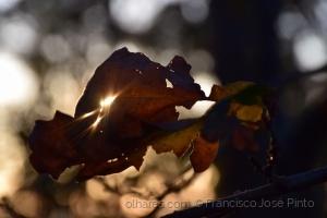 Paisagem Natural/luz de inverno