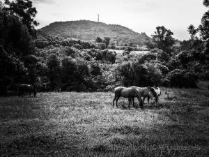 Animais/cavalos no campo...