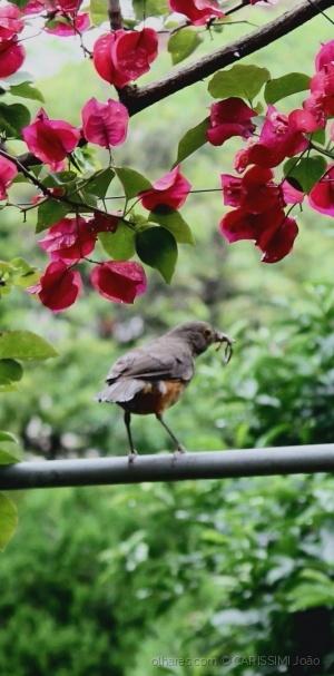Outros/Salve a primavera aí!  Pvf Desc