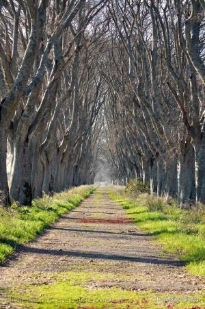 Paisagem Natural/As árvores são embaixadoras do tempo !