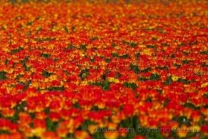 Outros/Há uma primavera em cada vida (...)