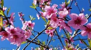 /Primavera em flor (ler sff)