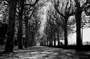 /Árvores nuas