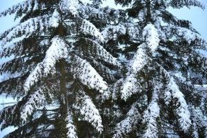 Paisagem Natural/Hoje é dia de neve