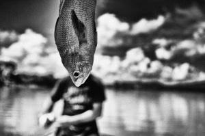 /O Peixe Que Caiu do Céu