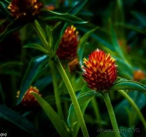 /flores do jardim
