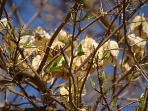 /Flores velhas,folhas novas