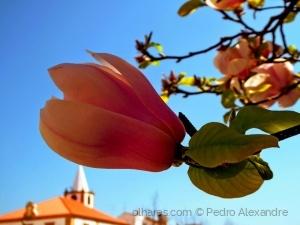 /As cores da Primavera