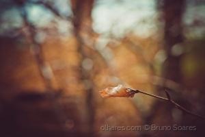 /Cores de Outono 2